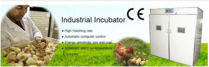 mesin-tetas-telur-industri-264-butir-industrial-incubator-1-tokomesin-solo