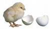 Mesin Penetas Telur Manual 30 Butir (EM-30) 1 tokomesin solo